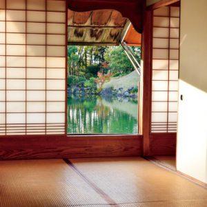 木の色のイメージ画像